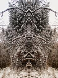 winter fractals