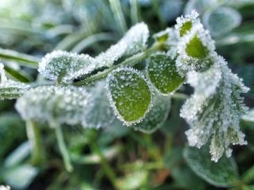 Winter 2015 Ludwigsburg