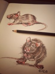 the rat fred