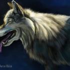 Wolf_Study_web